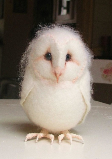 Baby barn owl images - photo#1