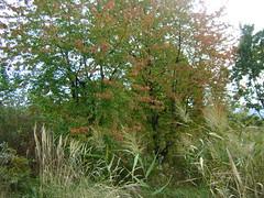 culorile toamnei/autumn colors
