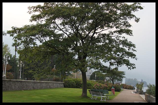 albero e panchina