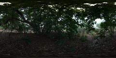 Jungleness