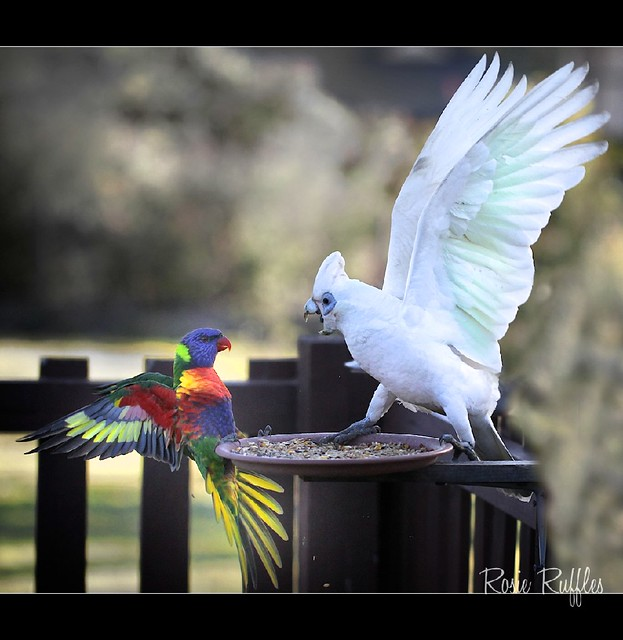 Feathered 'friends'.....