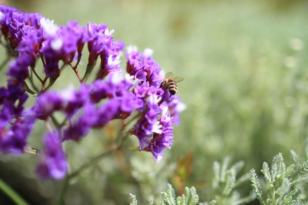 "Barossa Valley ""Two Hands"" - Bee"