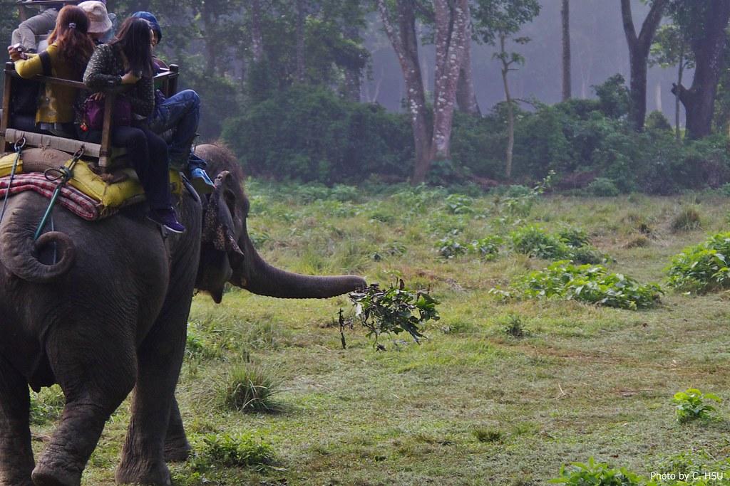 [遊記][尼泊爾]奇旺(Chitwan)國家公園