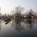 9133 Morning scene --Dal Lake , Kashmir , India