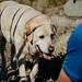 Striped Dog by CL Nichols