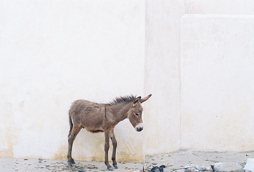 Lamu: a random donkey...