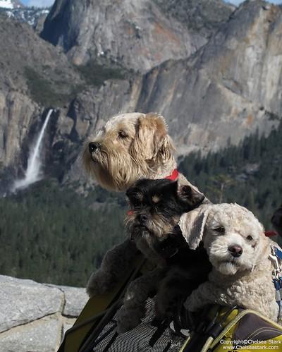 """""""Haeley  Dogs the best friends weekend"""" Yosemite National Park ©ChelseaStark http://www.chelseastarkphotography.com by chelseastarkphotography.com"""