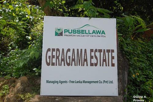SriLanka_09_GeragamaTeaPlantation_2010_034