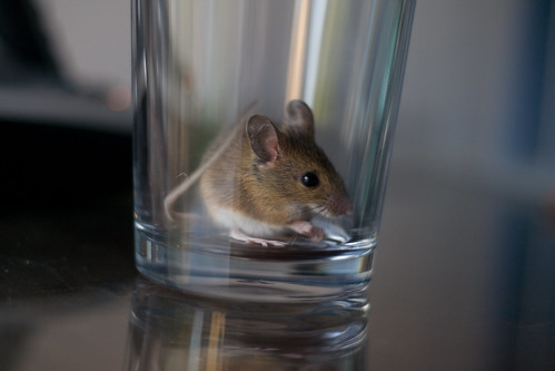 Mouse, Profile
