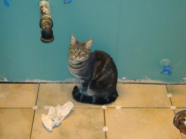DSC04326 Cat helper