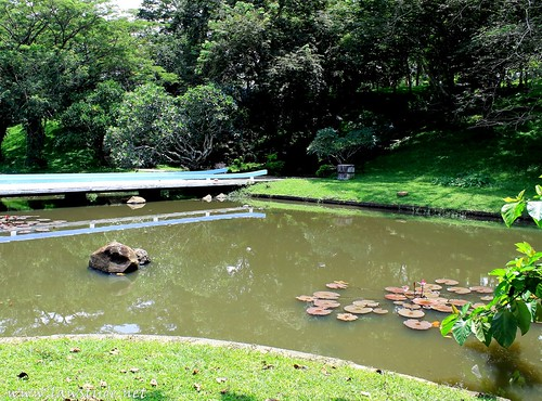 Oman is an island cavinti 39 s japanese garden for Laguna koi ponds
