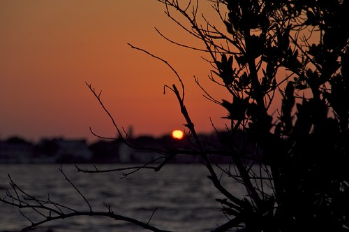sea beach nature water leaves silhouette sunrise nikon florida branches sunrises 2010 bowditchpoint soutwestflorida d5000 nikond5000