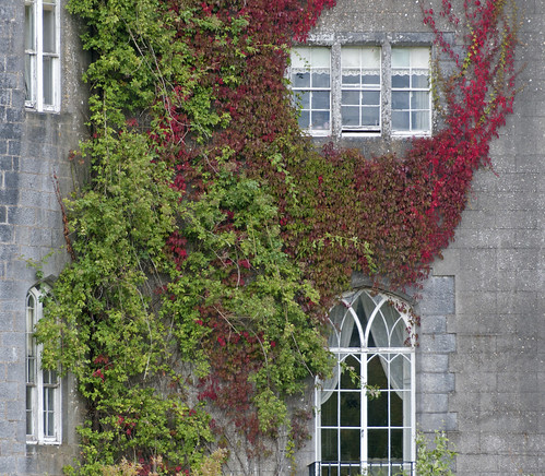 ireland ivy forcedperspective offaly birrcastledemesne