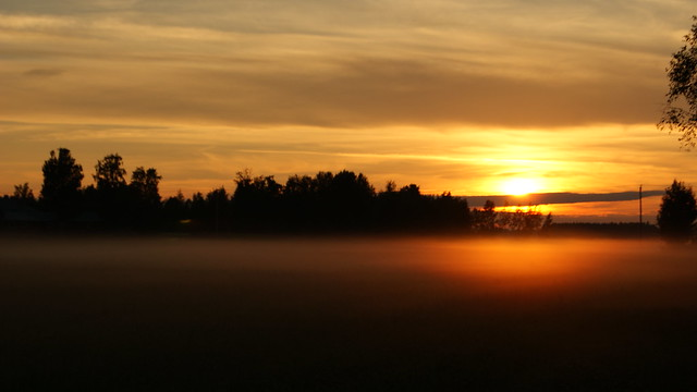 Sunset, fog and field