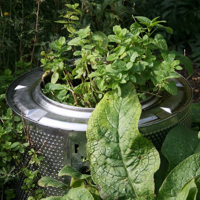 Minty washing machine drum planter - recycling garden ideas