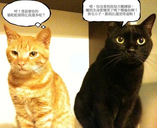 貓的辦公室物語