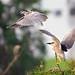 Birds in the Wild !!!