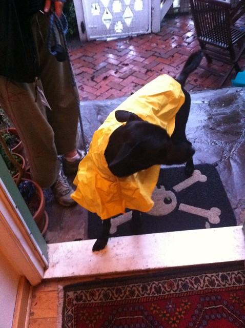 Header of rain dog