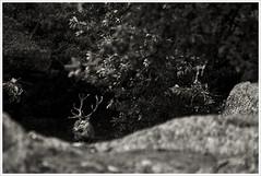Bichito del bosque