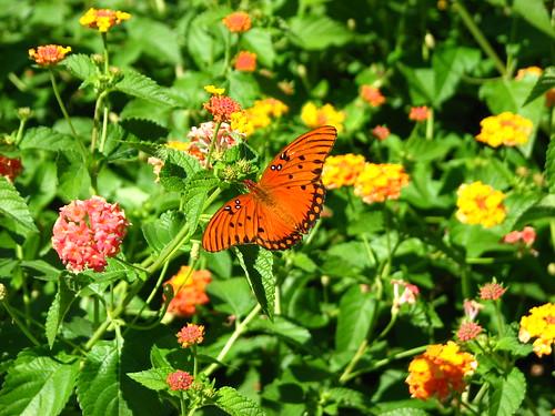 vacation butterfly louisiana plantation houmashouse