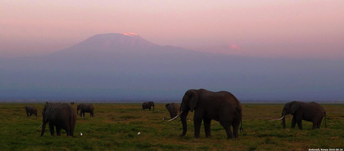 2010 animal动物 lx3 kenya肯尼亚 africa非洲 panasonic松下