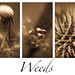 weeds triptych by annems1