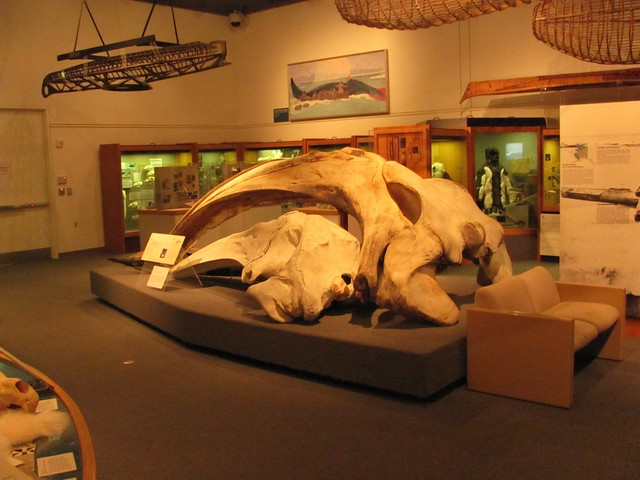 University of Alaska Museum of the North by CC user mmmavocado on Flickr
