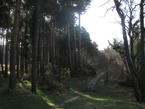 Part of the Wicklow Way, as it ascends toward Powerscourt