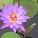Small photo of Nil Manel Flower