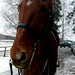 Small photo of German warmblood Luka