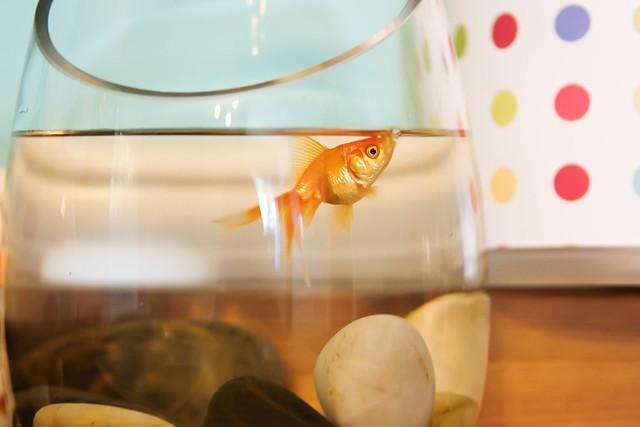 SEPTfish