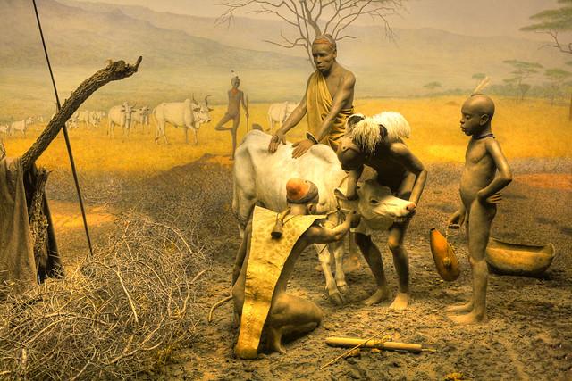 American Museum Of Natural History Dioramas