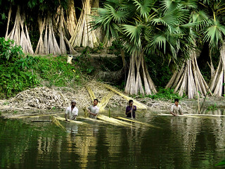 Farmers soaking jute in water