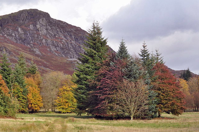 Autumn in the Galloway hills
