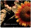 _MG_9197 by Huda Hussain