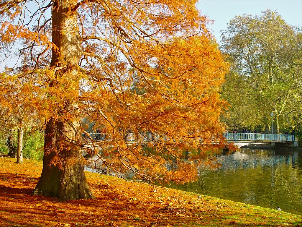 Autumn - St James's Park, London.