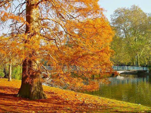 Autumn - St James's Park, London.