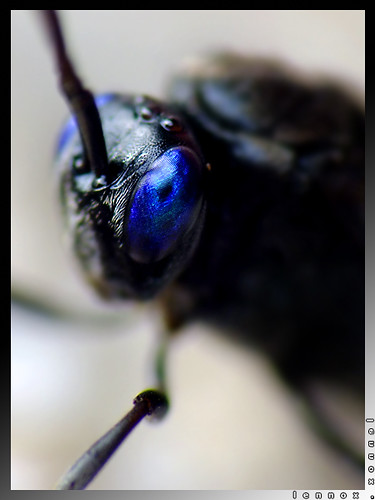Explored: Wasp Up Again, Blue Eyes?!