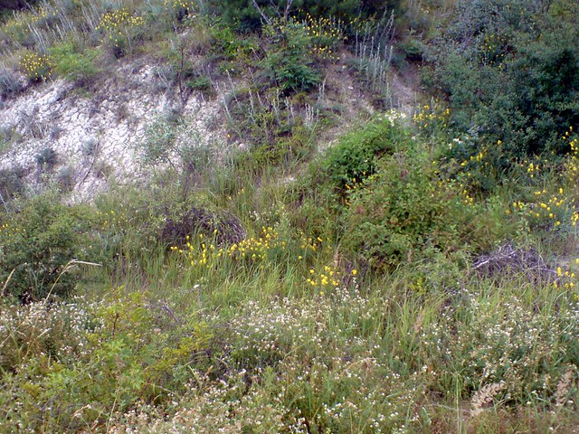 In wildy - Flowers of the feeld & Charming herbs | Билки и полски цветя