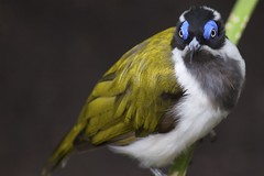 chickadee(0.0), brambling(0.0), animal(1.0), yellow(1.0), wing(1.0), nature(1.0), fauna(1.0), finch(1.0), close-up(1.0), green jay(1.0), beak(1.0), bird(1.0), wildlife(1.0),