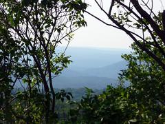 Mountains View Through the Trees