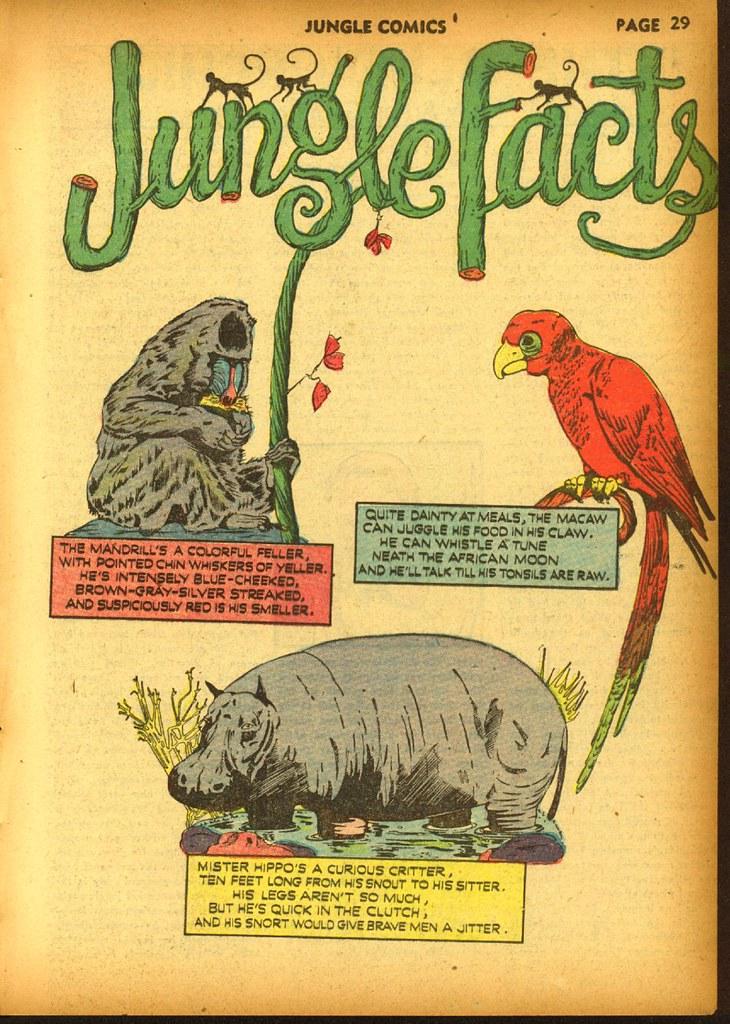 jungle20_32