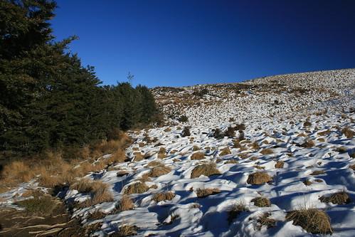 newzealand mountain snow history creek canon landscape bush track walkway volcanic beech tramp coalmine mtsomers beechforest woolshedcreek