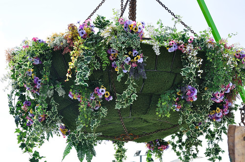 Bournemouth in Bloom - Hanging Basket