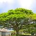 Small photo of Punahou School
