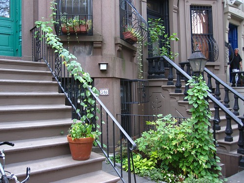 Part of a Park Slope block entered in the Greenest Block In Brooklyn Contest. Final judging of the contest is on Tuesday, July 27th.