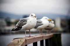 Birds on Bygdøy