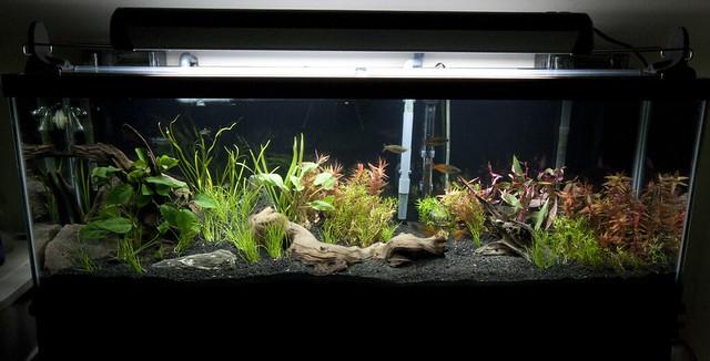 New 40 gallon long tank flourite substrate rena xp3 for 50 gallon fish tank filter