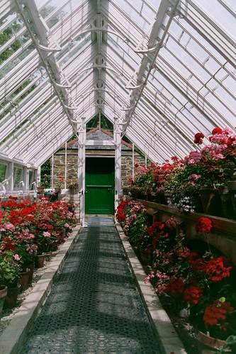 Geranium Greenhouse