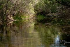 Summer at Dry Creek Preserve 3